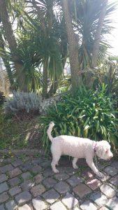 Här finns palmer!