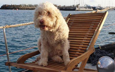 Kapten Coccos på rymmen & vi som tänkte segla vidare….