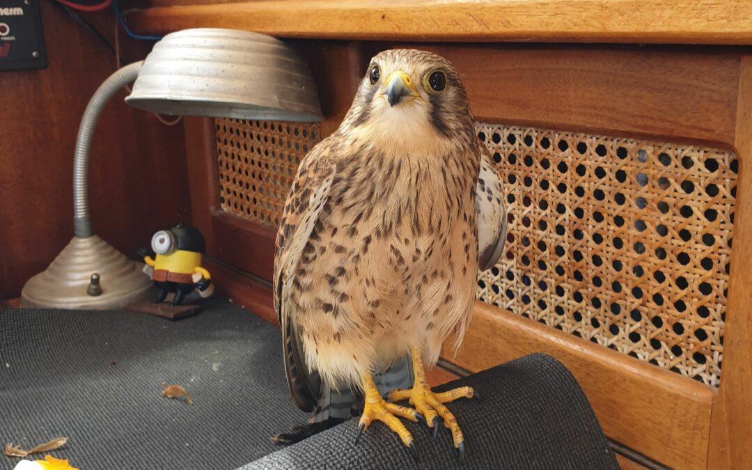 Fåglar ombord – Vad är det som händer?